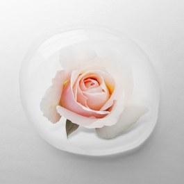 法國玫瑰純露(蒸餾)